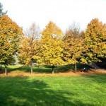 """Осень в парке """"Сады Маргариты"""""""