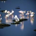 Заповедник лагуна Фламинго в провинции Ористано