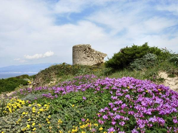Весна на острове Сардиния