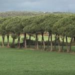 Сиена в Тоскане, провинции Италии