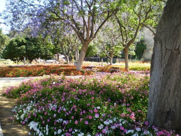 Ботаничекий сад в Кальяри